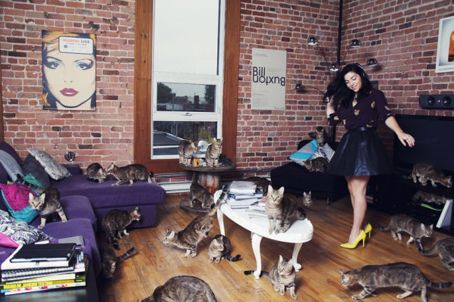 Andreanne-Lupien-cats-photography-10