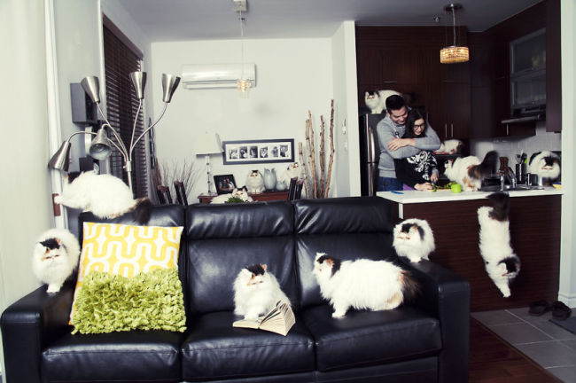 Andreanne-Lupien-cats-photography-2