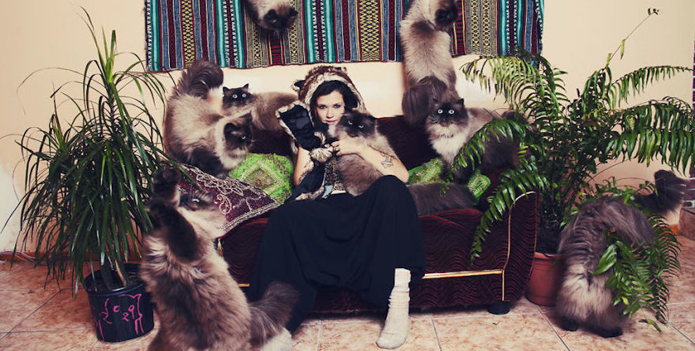 Andreanne-Lupien-cats-photography