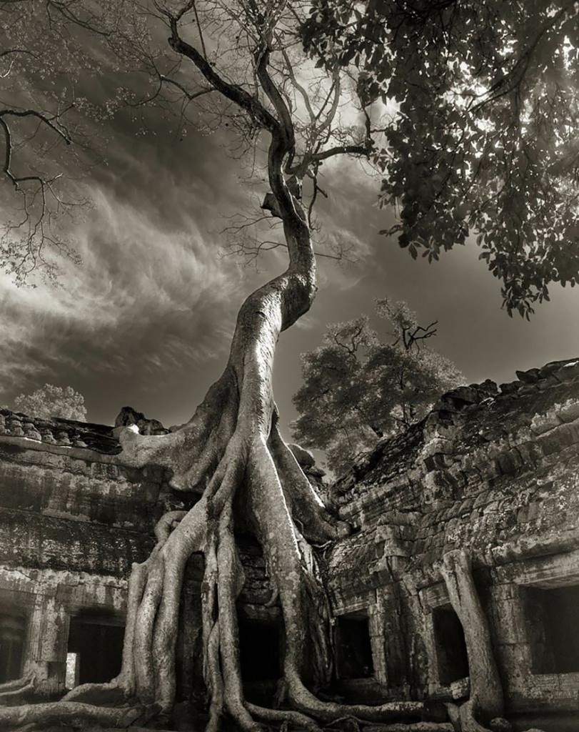 ancient-trees-beth-moon-17-811x1024