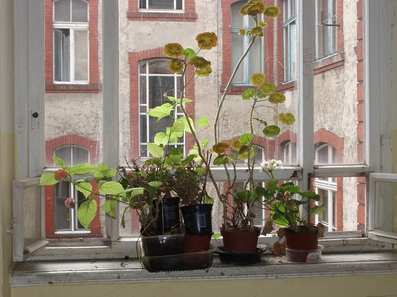 berlin-hinterhof-schoenhauser-allee-41-ontai-3
